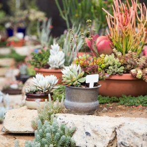 arrangements at waterwise botanicals