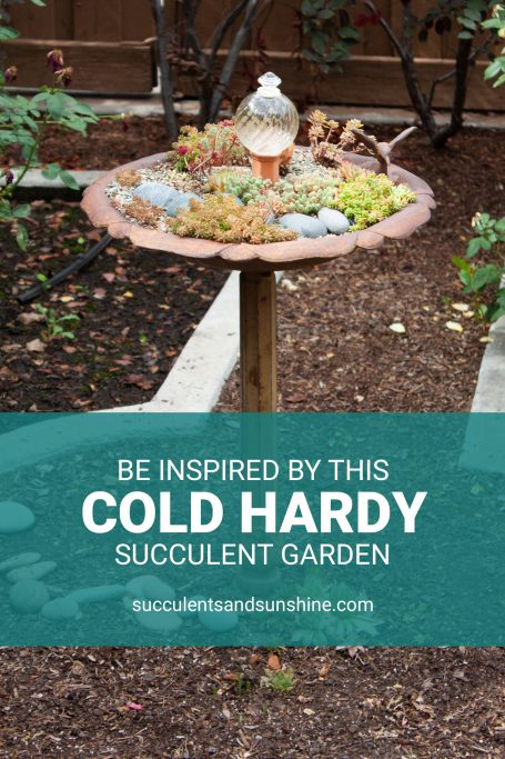 cold hardy outdoor succulent garden utah