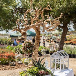 dried wood centerpiece succulents