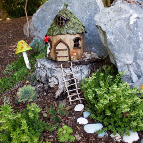 gnome home succulents sedum
