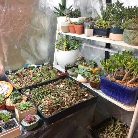 lots of succulents in grow tent