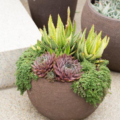 outdoor plants succulents arrangement huntington gardens