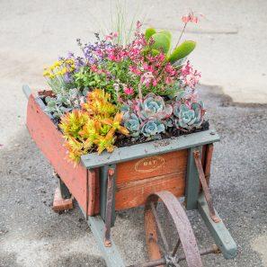 succulent wheelbarrow