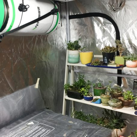 succulents in grow tent air filter