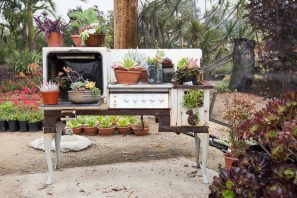 succulents in old stove