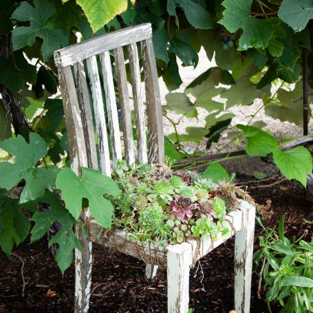 succulents planted in chair cold hardy