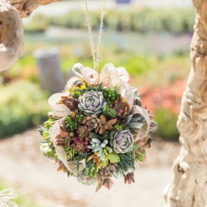 topiary ball succulents