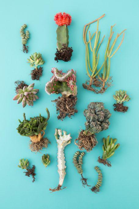 under sea succulents cactus
