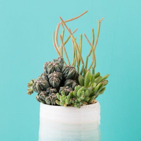 under the sea arrangement succulents