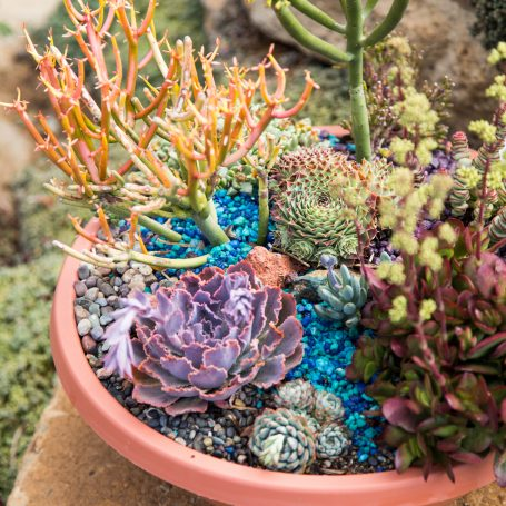 under the sea succulent arrangement