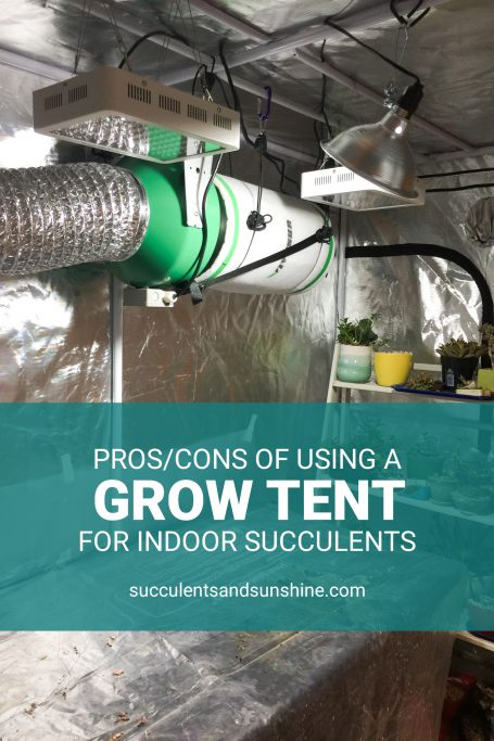 using a grow tent for succulents