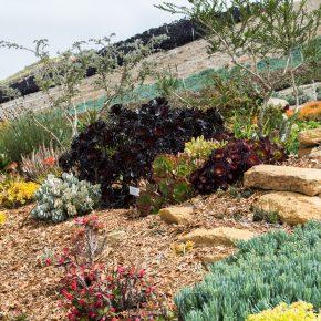 waterwise display garden
