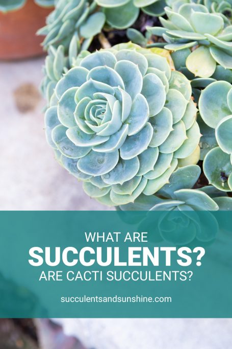 what are succulents
